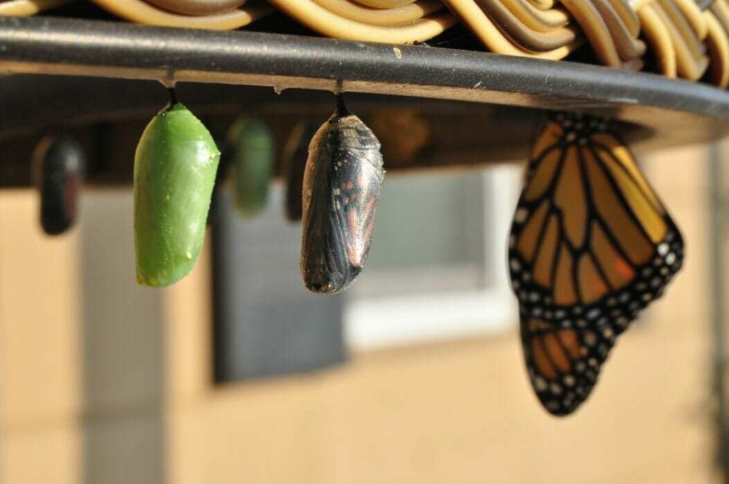 Leading Change - Image of Chrysalis and Butterfly