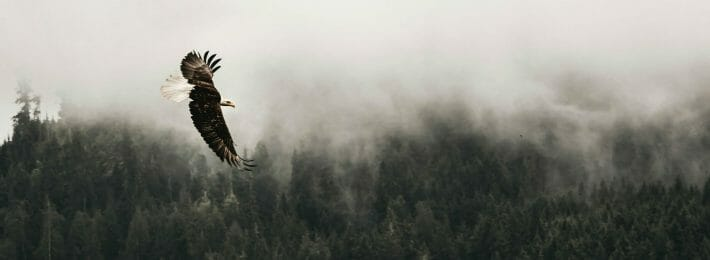 Military Students - Photo of an Eagle Flying Over Woodland