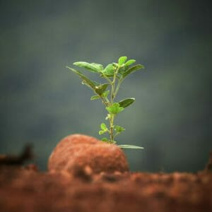 Chief Advancement Officer Nurturing Growth of a New Relationship with a President - Image of a green plant sprouting from the earth