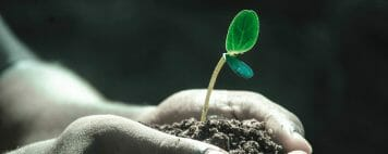 Why Donors Give - Image of a Growing Plant
