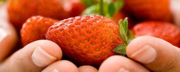 Holding fresh strawberries