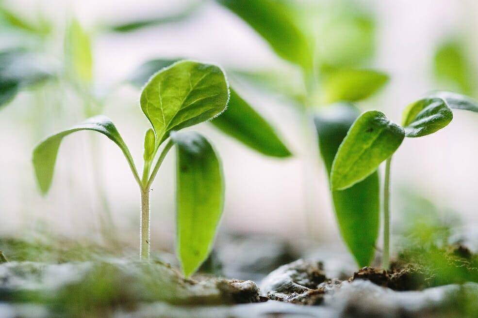 Image of plants growing