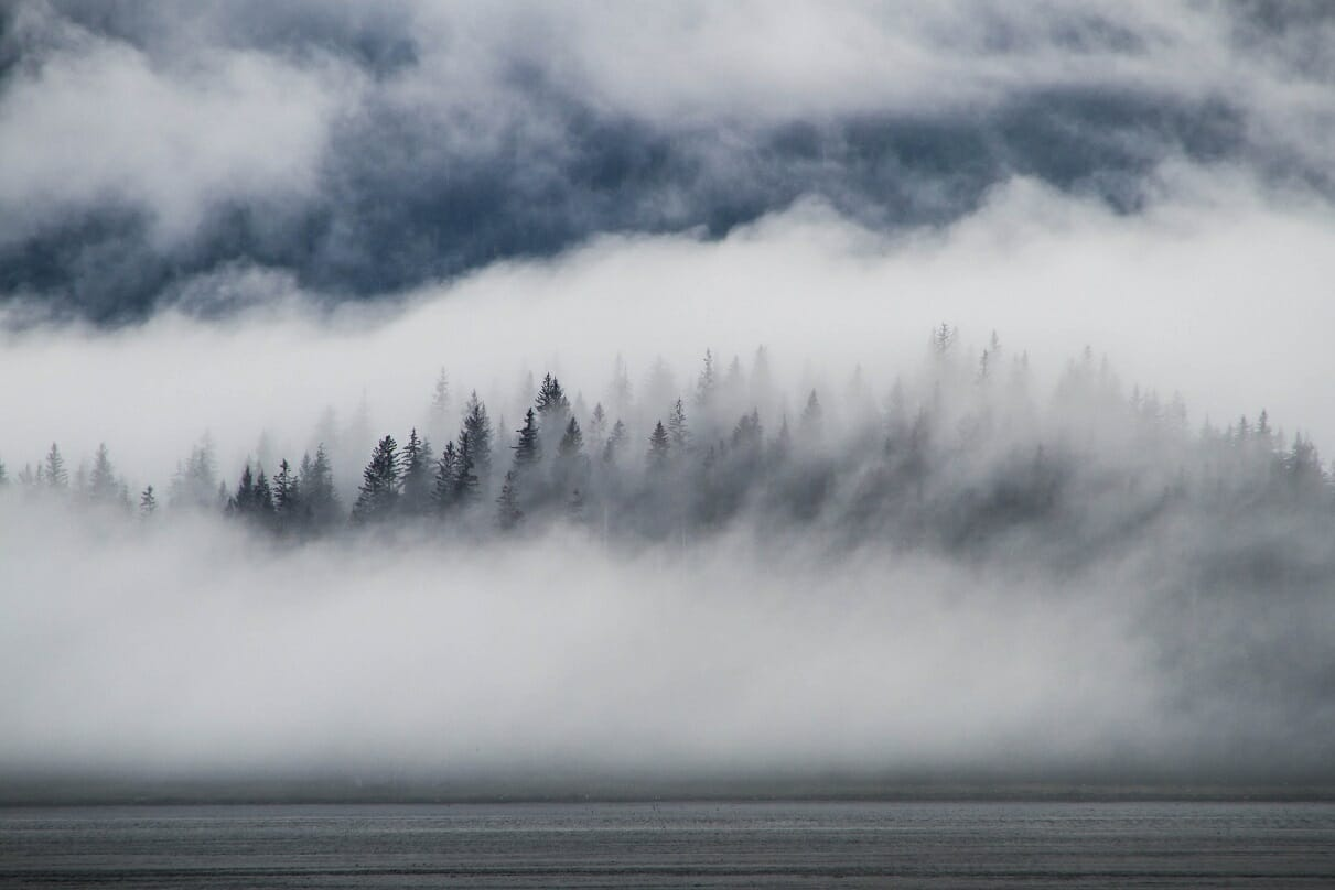 Image of trees lost in fog