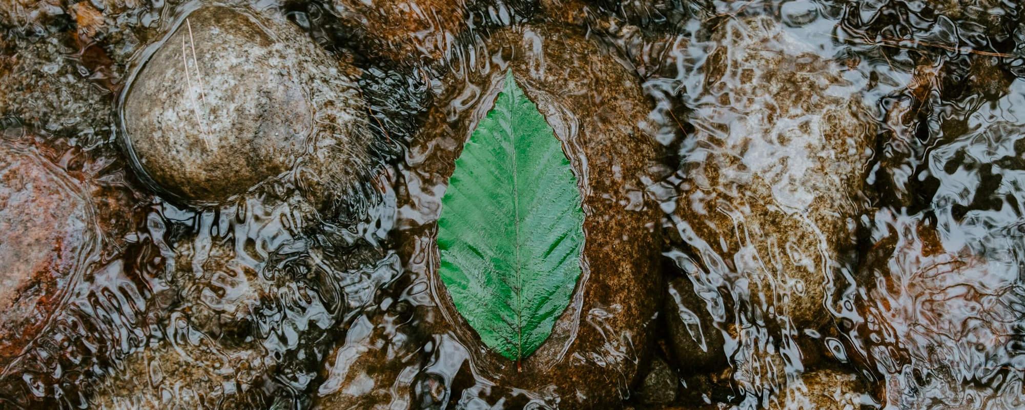 leaf-floating